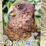 掛川花鳥園ポスター