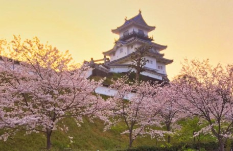 掛川城公園の桜